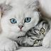 8 Bahasa Tubuh Kucing Jantan yang Menandakan Tengah Jatuh Cinta