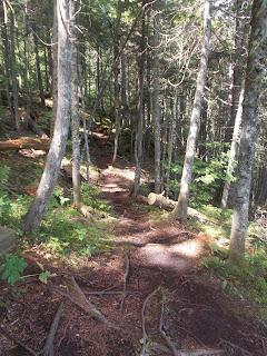 Vallée-Bras-du-Nord, sentier, forêt, paysage, l'été