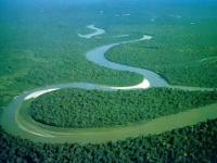 Wow, Ternyata Hewan Raksasa Ini Yang Membentuk Sungai Amazon Dengan Cara Menakjubkan