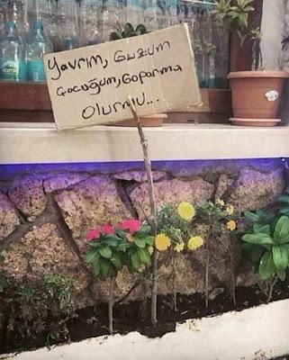 çiçek, gül, çiçek bahçesi, ilan, uyarı, çiçekleri koparmayın, anadolu insanı, tatlı dil, pencere çiçekleri, saksı, cam önü, camdan cama,