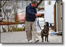 Picture of man walking dog