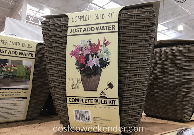 Add some curb appeal to your home with the Complete Bulb Kit Container