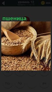 Колосья пшеницы и зерна лежат в лукошке с деревянной ложкой