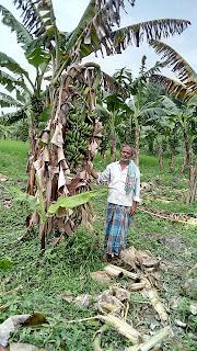 banana-farmer-need-compensation-bihar