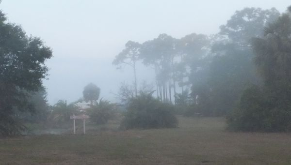 fog at wickham park florida dear miss mermaid