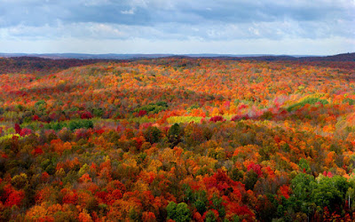 Where to View the Fall Colors in Michigan