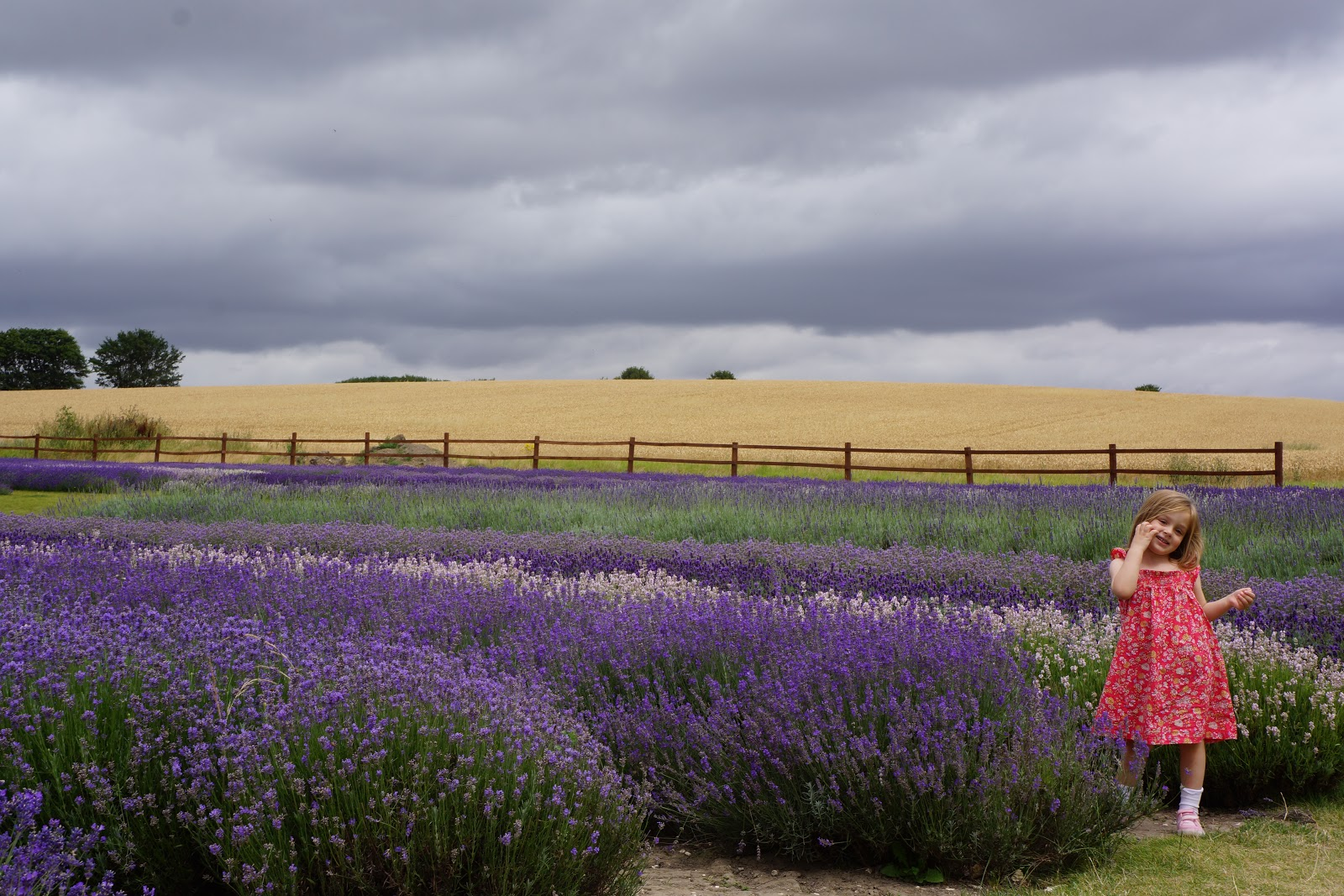 girl at lavender and wheat fields at hitchin