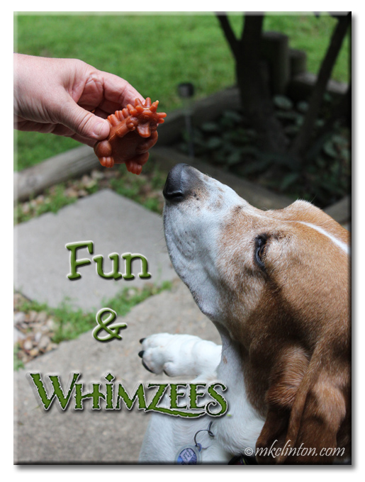 Basset Hound about to taste a Whimzess hedgehog