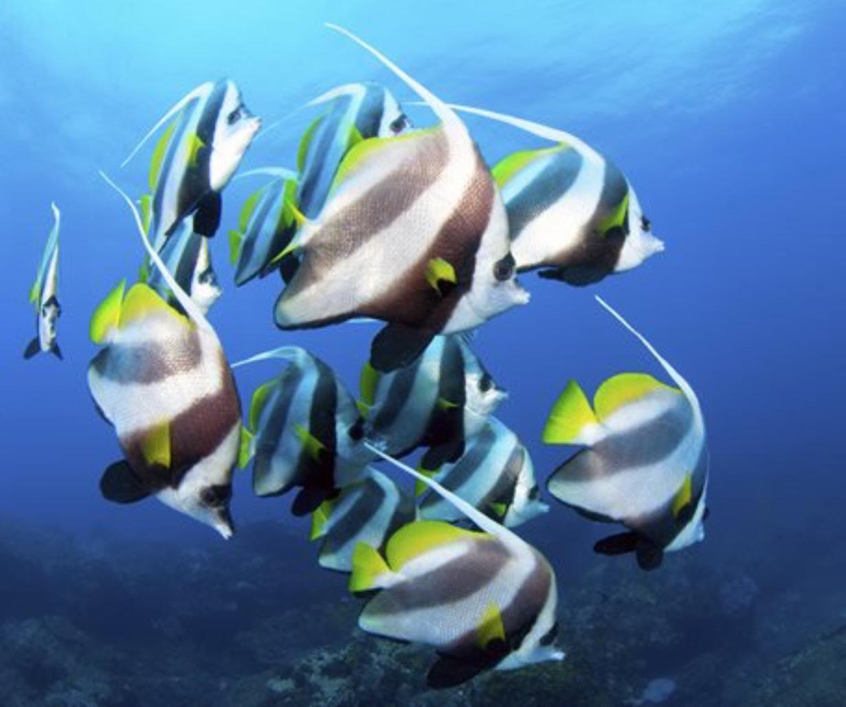 Stampinshout Nancyannnovak Gmail Seaside Shore Fish