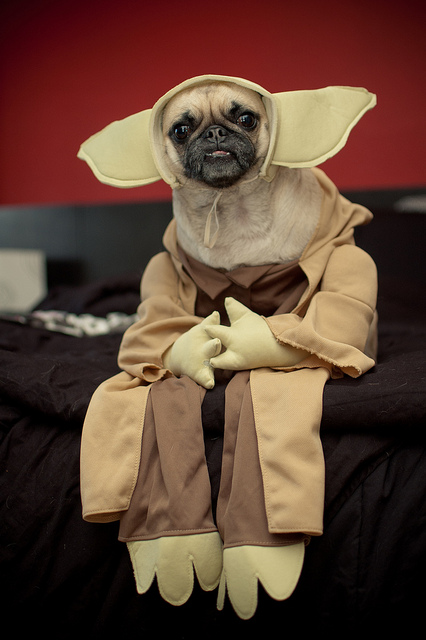 The New Jersey Nerd: 50 Dogs in Star Wars Costumes
