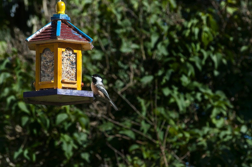 How to choose the right bird feeder?