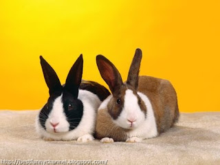 Two nice rabbits.