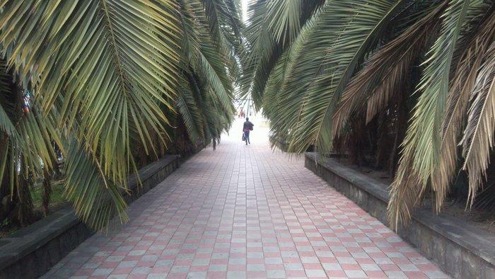Аллея из пальм