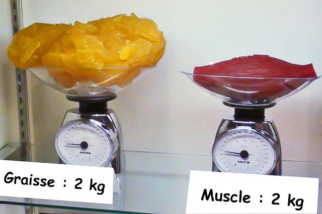 Graisse vs Muscle