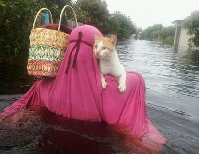 Muslimah selamatkan kucing