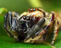 Considerando que ela mede apenas cinco milímetros de comprimento, não é grandes coisas, mas é bom ficar longe, pois a criatura, além de horripilante, é venenosa.