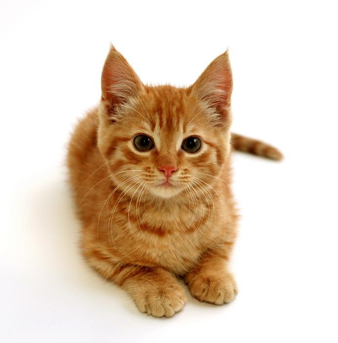Ciri Kucing Yang Kena Flu Drh Fira Sovica