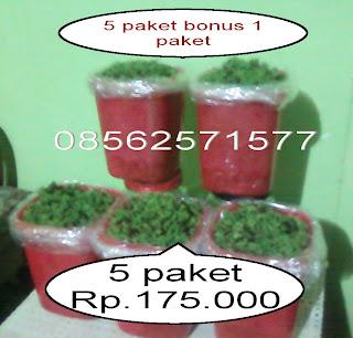 jual bibit azolla microphylla  5 paket bonus 1 paket