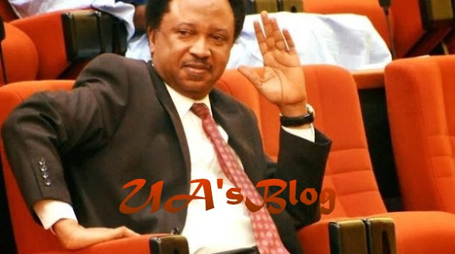 Kaduna government concealing mass killings in state - Shehu Sani