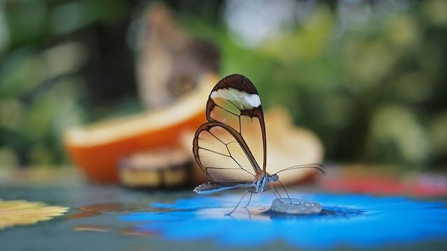 اجمل الفراشات في العالم