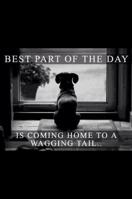 Cute Dog Quotes : Best part of the day is coming home to a wagging tail