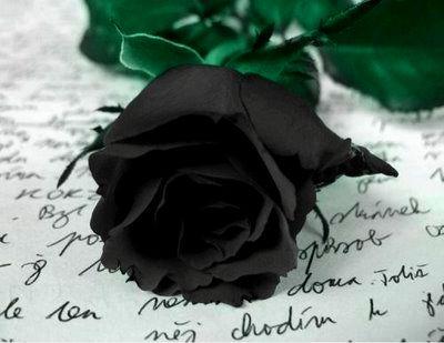 rosa preta negra poesia