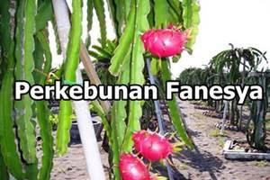 Lowongan Kerja Pekanbaru : Perkebunan Fanesya Agustus 2017