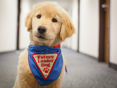 NASA - Source: http://www.nasa.gov/centers/langley/news/researchernews/rn_HorowitzLeaderDog_prt.htm