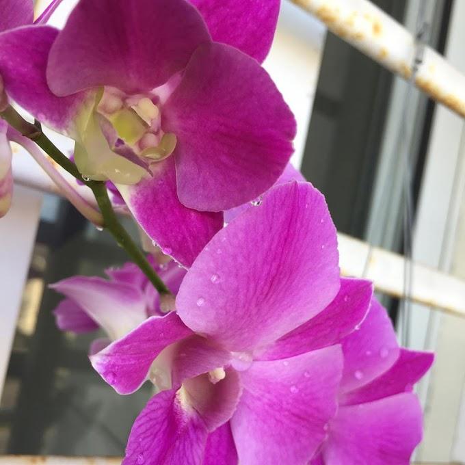 Minat dengan bunga Orkid