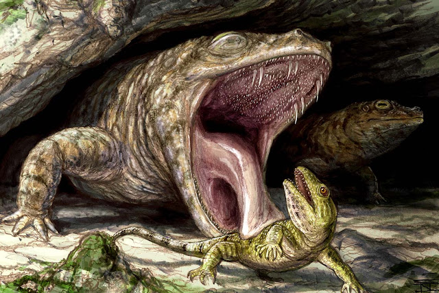 Ancient amphibian had mouthful of teeth