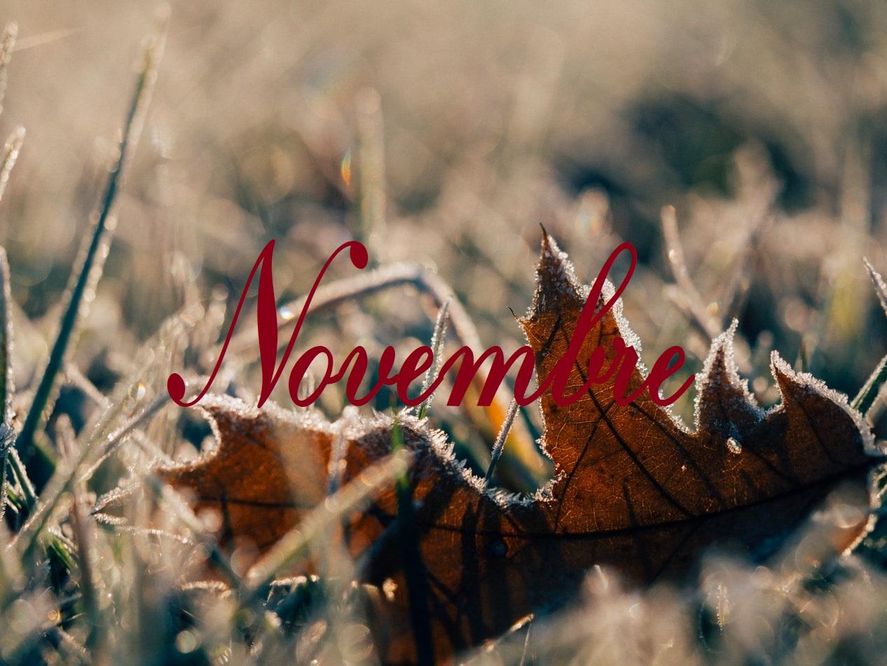 Bilan lecture du mois de Novembre
