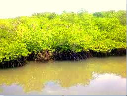 Manfaat Hutan Bakau (Mangrove)