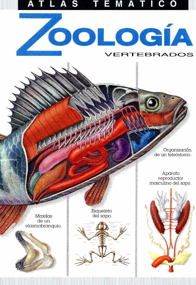 Atlas Temático de Zoología Vertebrados