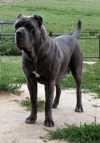 Top 10 Black Dogs Breeds - LUV My dogs