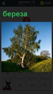 На поляне в ложбине стоит одинокая береза и синее небо над ней