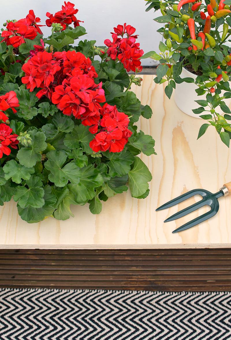 kado flowers DIY