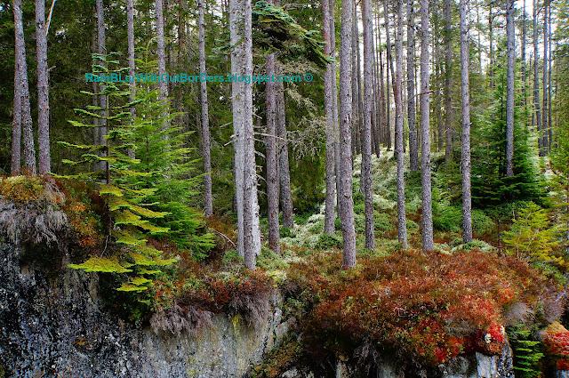 Strathmashie Forest, Cairngorms National Park, Scotland, UK