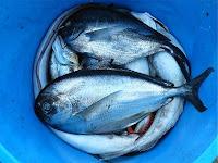 Oceana denuncia pesca de arrastre ilegal en el Mediterráneo
