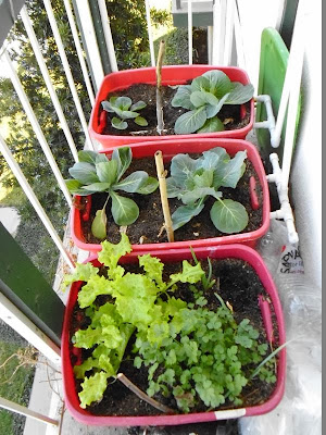 Balcony garden right overview