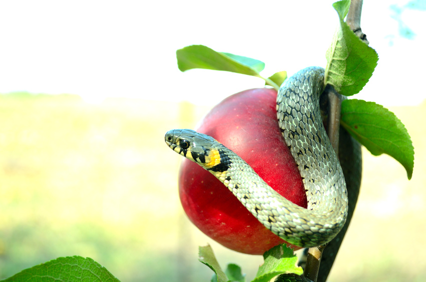 Snake literotica