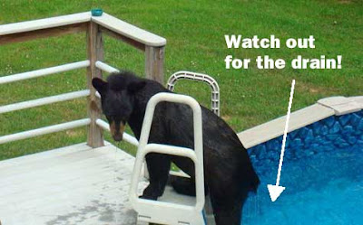 Black bear climbing out of a home swimming pool with white type above, Watch out for the drain!