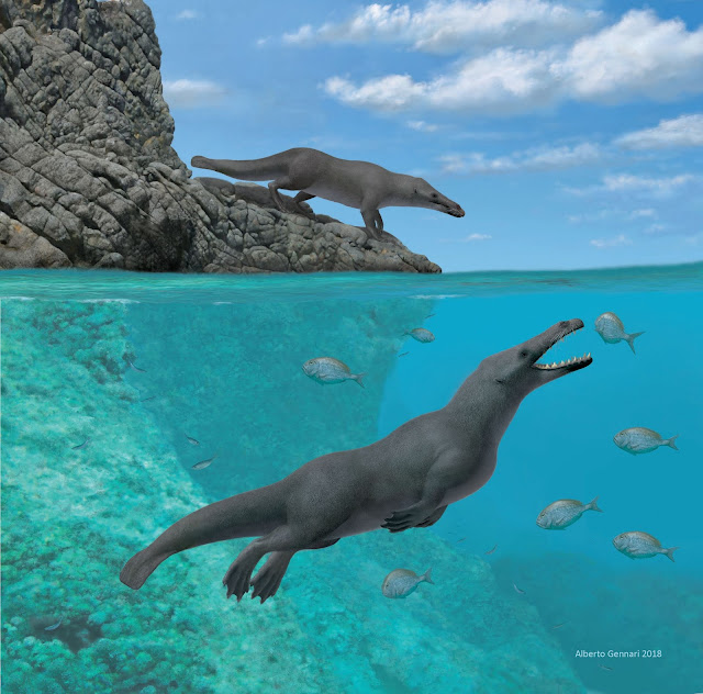 Ancient, four-legged whale with otter-like features found along the coast of Peru