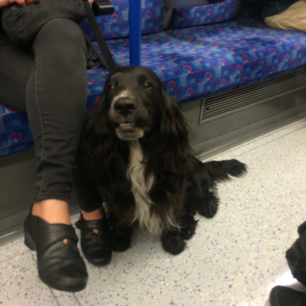 Dogs on the tube