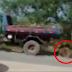 Vídeo revoltante mostra momento em que cavalo é arrastado por caminhão de lixo na Bahia