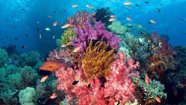 Ekosistem bawah laut wisata Raja Ampat