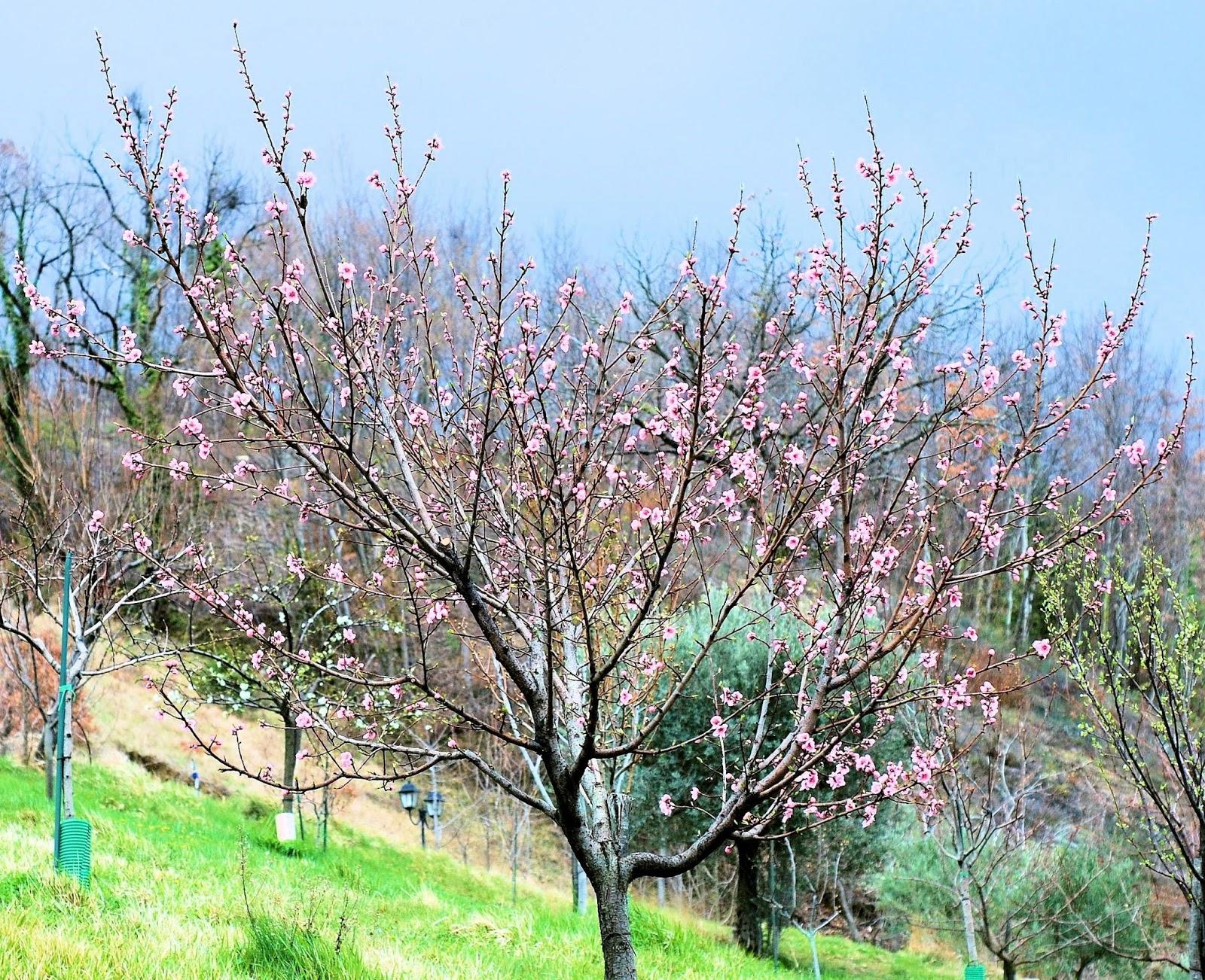 10 rboles frutales para el jard n amigos de la jardiner a for Arboles aromaticos para jardin