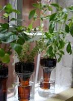 http://mundo-manualidades.com/riego-facil-para-plantas-con-botellas-reciclables.html
