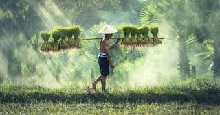 Çiftçiliğin Tarihçesi