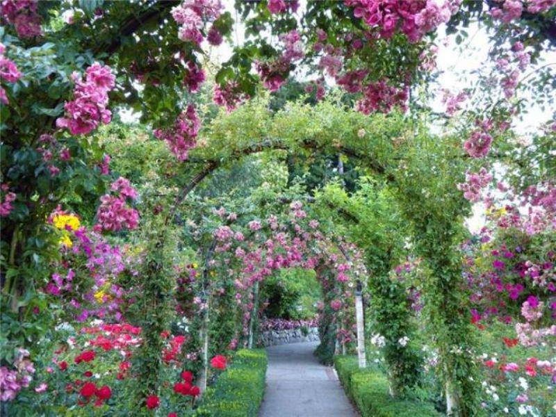 Switzerland Rose Garden