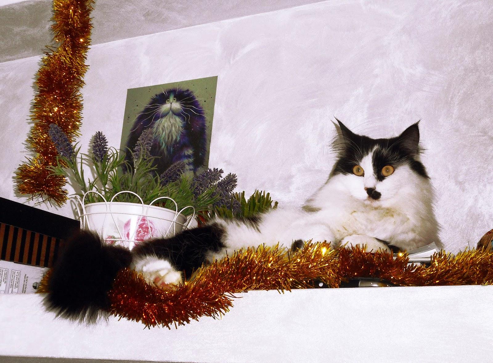 жительница кото - кафе Женевьева